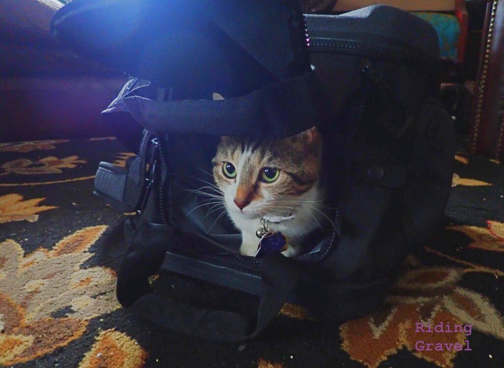 Image of a cat inside a Topeak Pakgo Gearpack