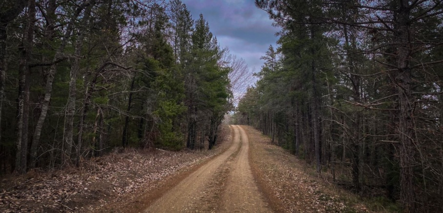 A view of a forested two-track gravel road with a rolling hill in the distance.
