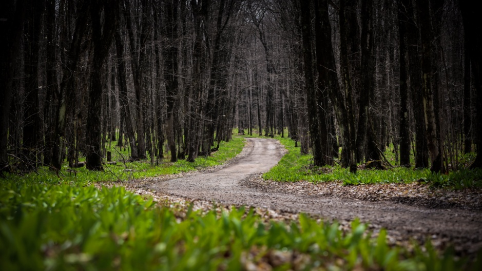 View of a winding forest road.